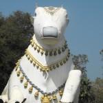 Epic Story Of Mahanandi Temple,Thimmapuram Andhra Pradesh