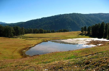 Sanasar – 119km from Jammu and 17km from Patnitop. It is cup shape field enclosed by huge conifers
